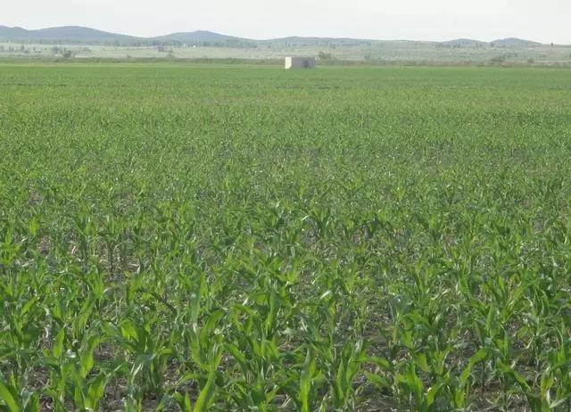日本人租了1500亩地,闲置5年任荒草疯长
